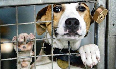 NSW is a doggy death row